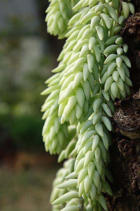 Plant, Nature, Jade, Growth