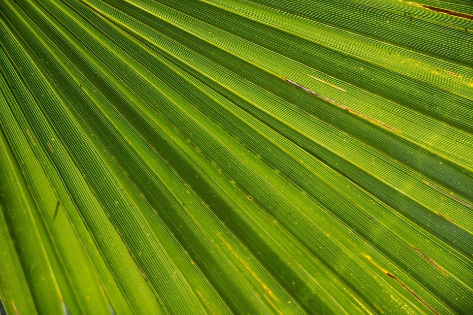 Palm, Leaf, James, Palm Tree, Close, Beach