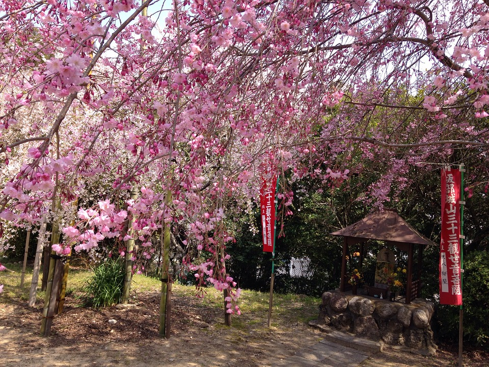 Free Photo Japan Flowers Cherry Spring Max Pixel