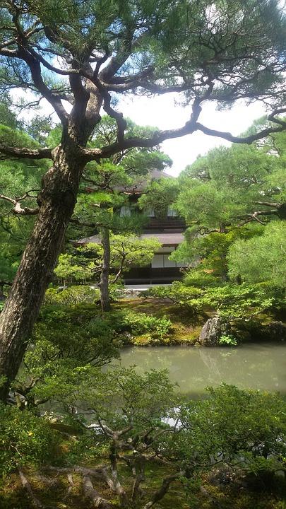 Travel, Nature, Japan, Landscape, Garden, Park
