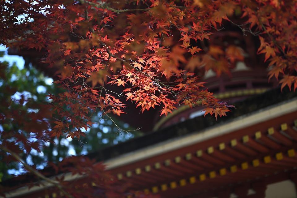 Koyasan, Japan, Temple, World Heritage Site, Mount Koya