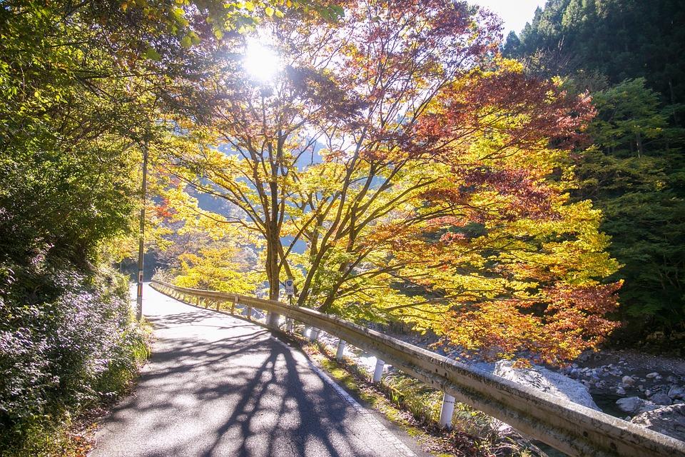 Road, Forest, Tree, Leaves, Autumn, Japan, Sun, Light