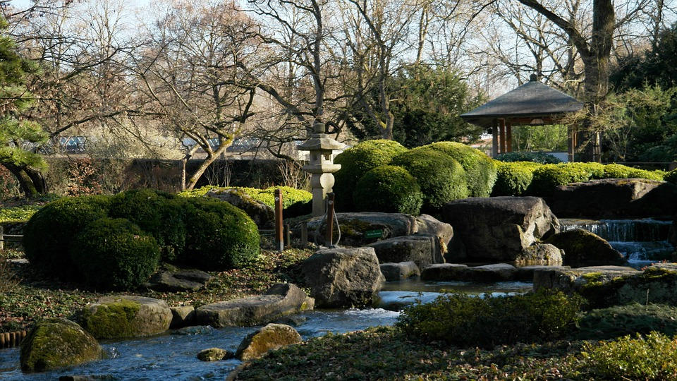 Asian, Nature, Japanese, Japanese Garden, Plant