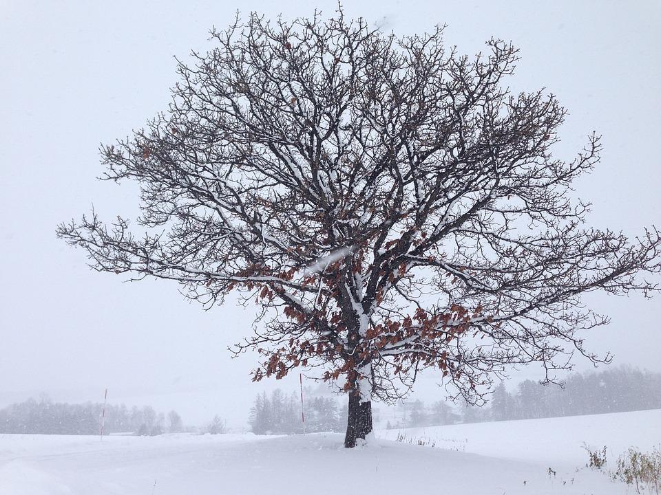 Hokkaido, Snow, Winter, Japan, Travel, Japanese, Famous