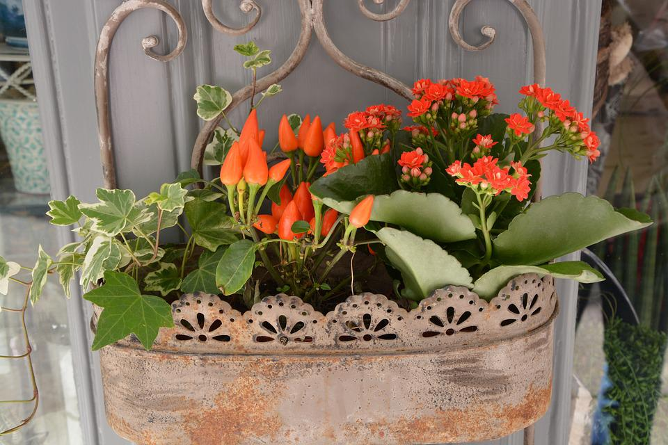 Red Flowers, Plant, Jardiniere, Decoration, Nature
