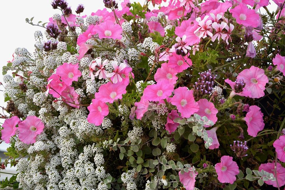 Free photo Jardiniere Pink Flowers Pot Decoration White - Max Pixel