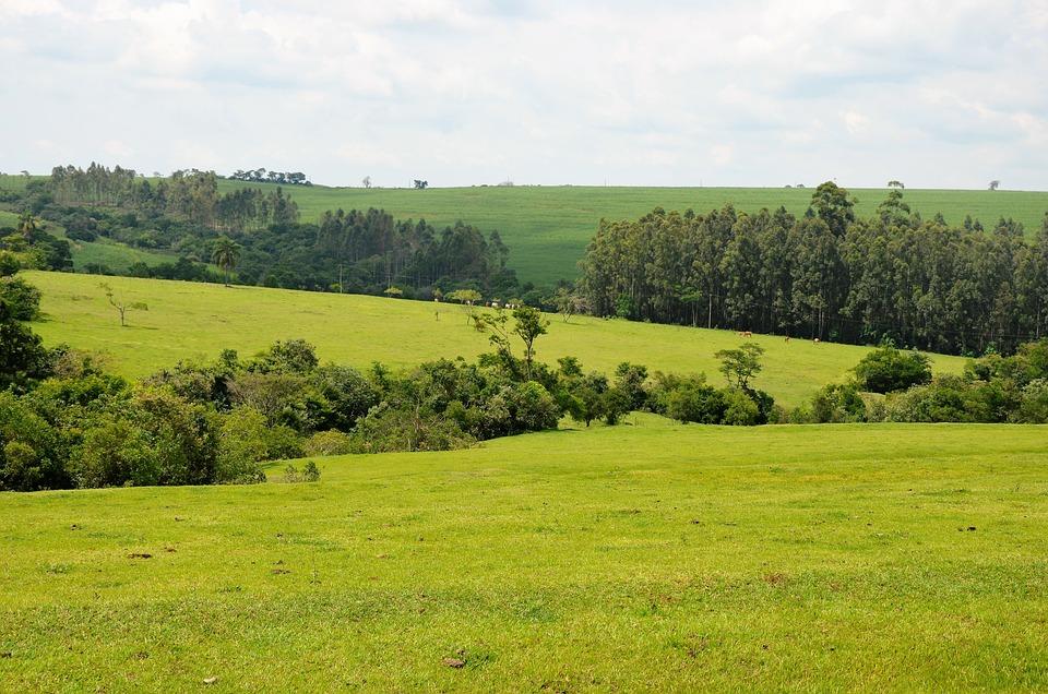 Landscape, Nature, Jau Brazil, Rural, Trees