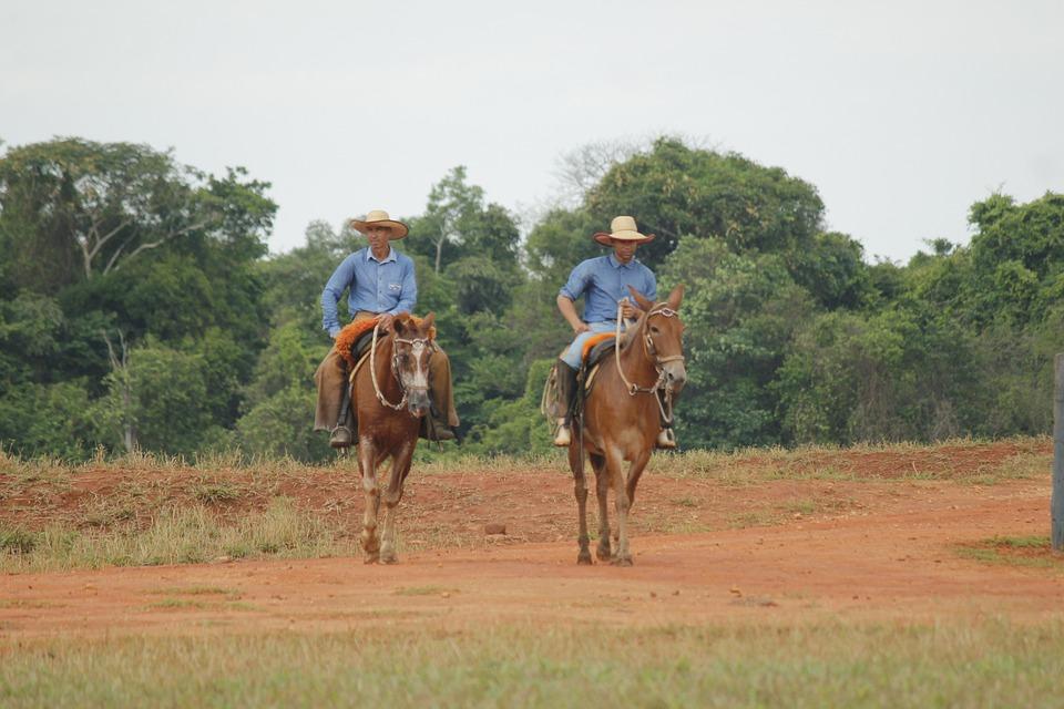 Jeans, Livestock, Work Of Field, Cowboy, Horse, Animals