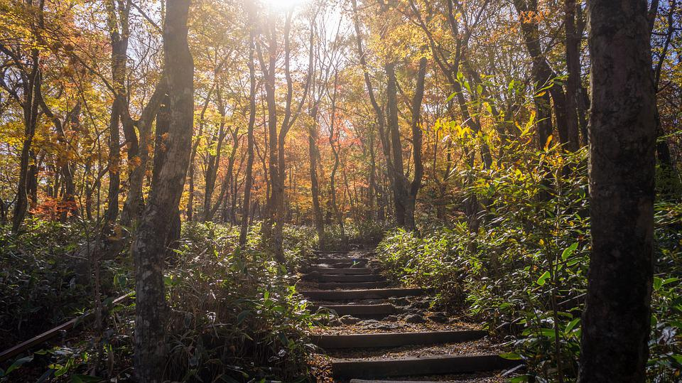 Autumn, Autumn Leaves, Wood, Forest, Gil, Stairs, Jeju