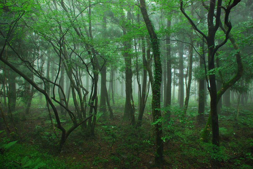 Wood, Jeju Island, Four Ryeoni, Forest