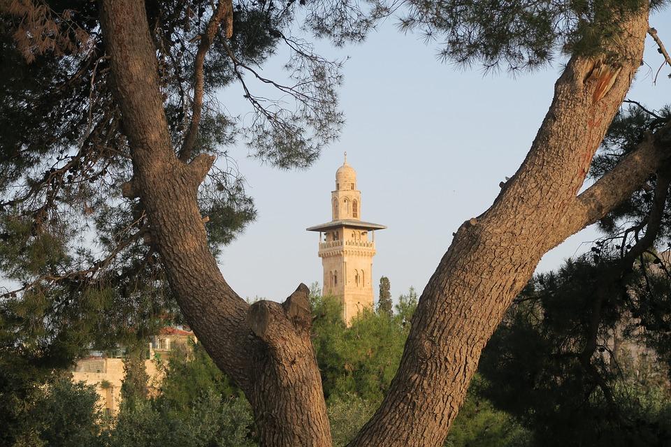 Tree, On, Religion, Nature, Minaret, Jerusalem