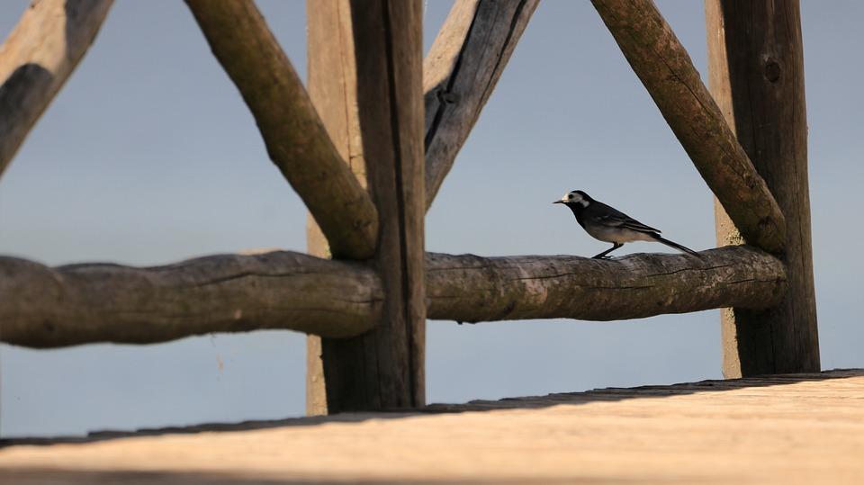 Bird, Web, Lake, Water, Nature, Waters, Jetty