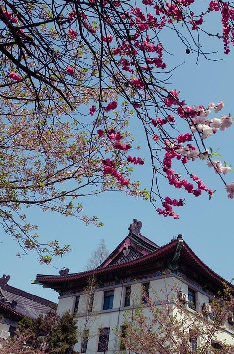 Spring, Jimingsi, Cherry Blossom