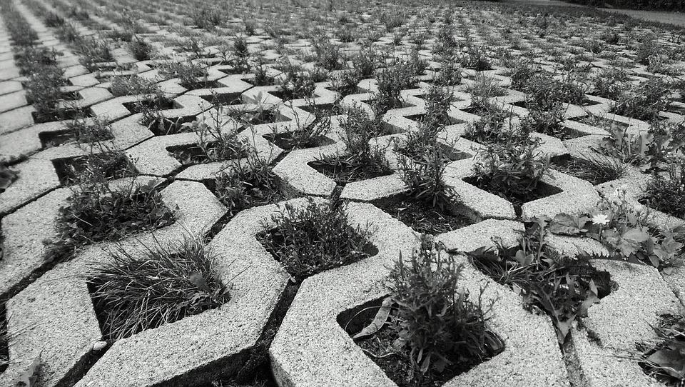 Ground, Stones, Away, Paving Stones, Joints, Plant