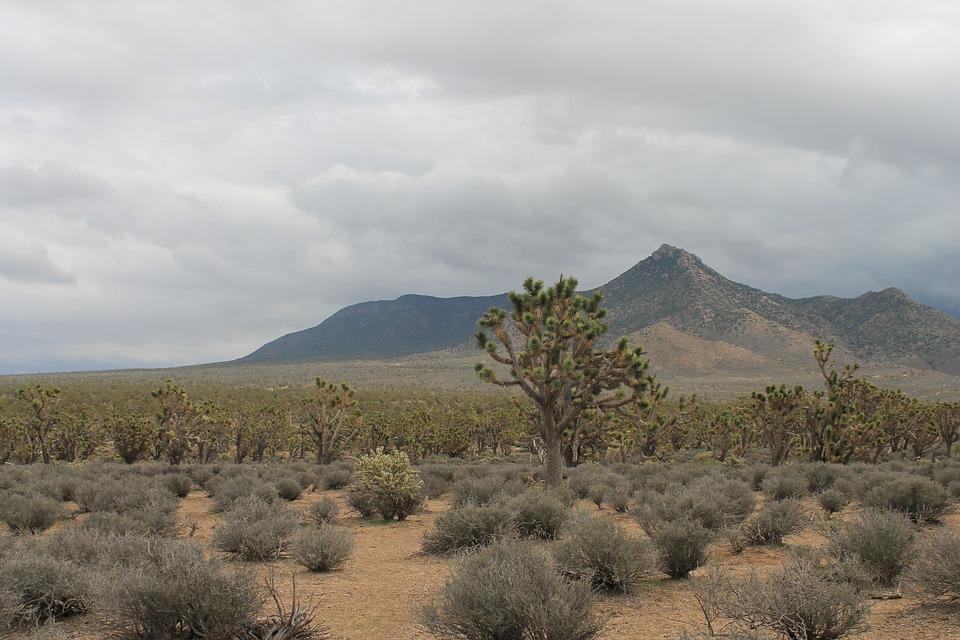 Arizona, Josua Tree, Desert, Usa, Nevada, America