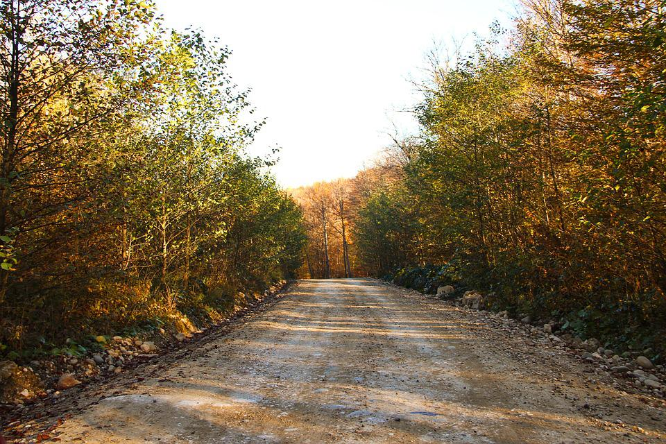 Forest, The Road In The Forest, Autumn, Journey