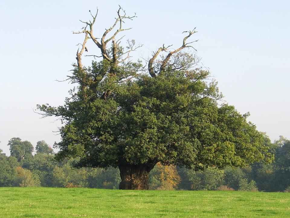 Summer Tree, Jubilee Park, Bromley