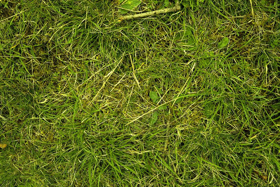 Grass, Meadow, Juicy, Nature, Green, Grasses