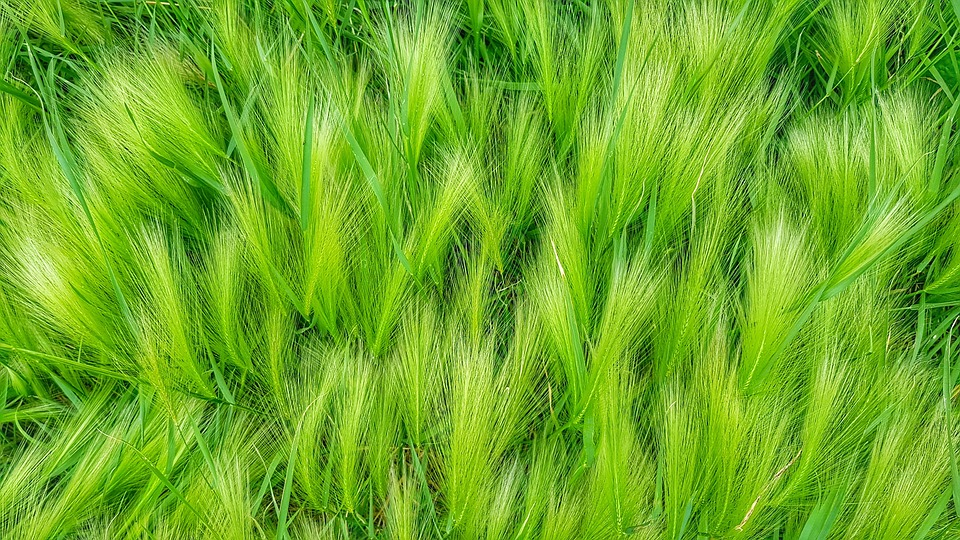 Grass, Greens, Green, Nature, Juicy, In The Summer Of