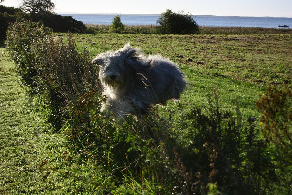 Jump, Dog, Hedge, Animal