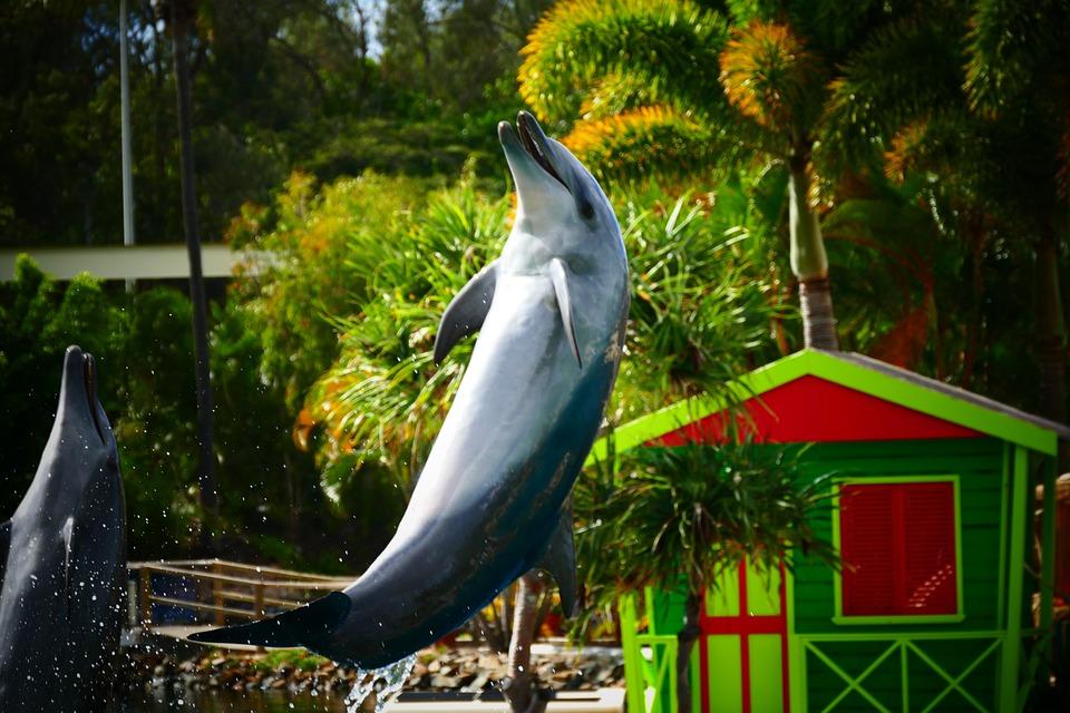 Dolphin, Smile, Jump, Animal, Ocean, Sea, Water, Mammal