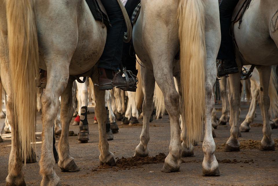 Camargue, Horses, Race, Jumper