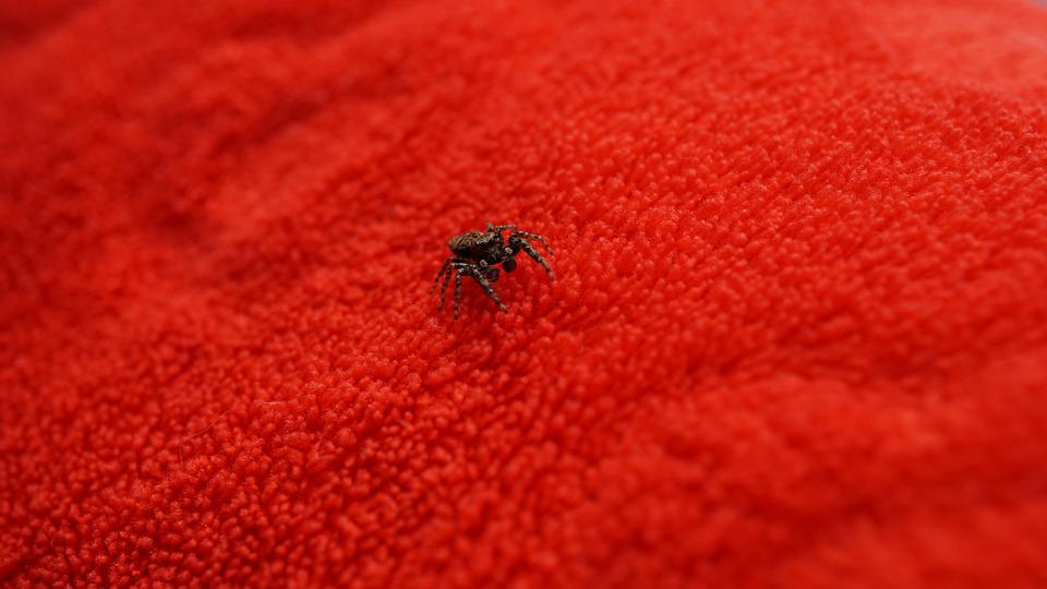 Background, Pattern, Spider, Insect, Jumping Spider