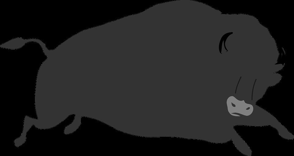 Bison, Eyes, Large, Body, Jumping, Black, Tail
