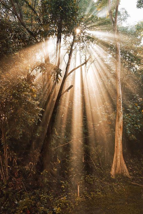 Nature, Tree, Forest, Jungle, Sun, Sunlight, Singapore