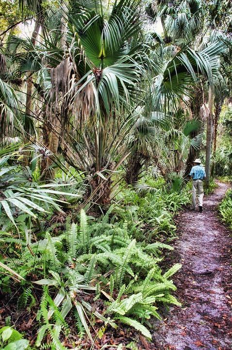 Florida, Highlands Hammock State Park, Jungle, Swamp