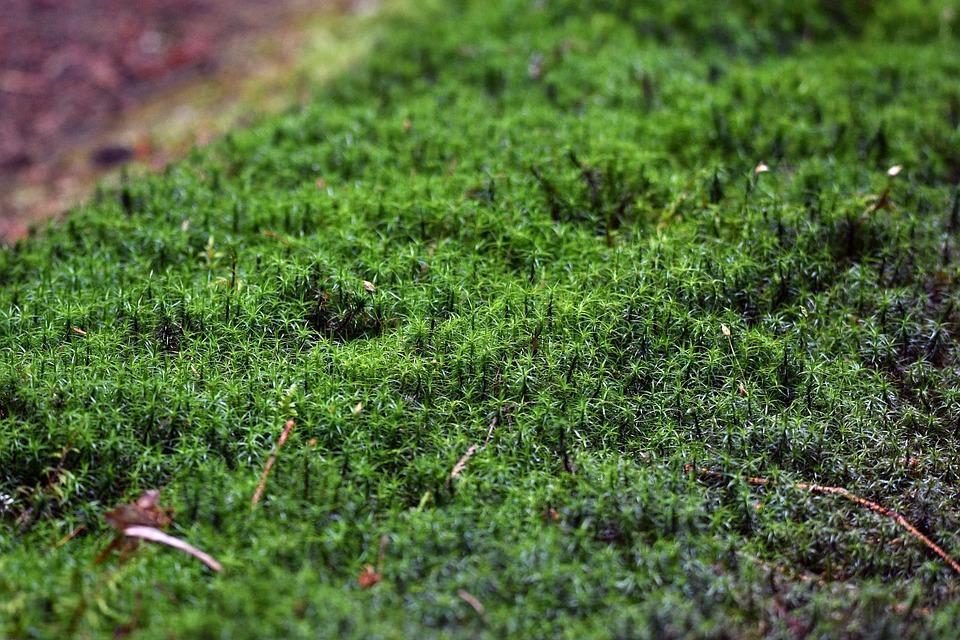 Moss, Forest, Nature, Green, Landscape, Ecology, Jungle