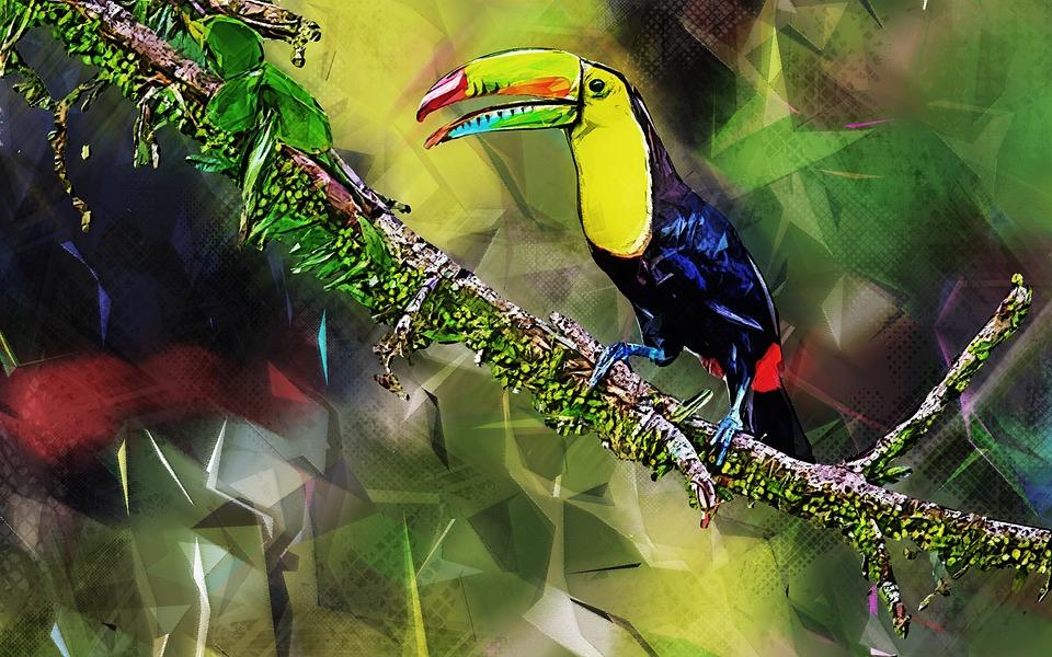 Toucan, Bird, Exotic, Jungle, Branch, Animal, Nature