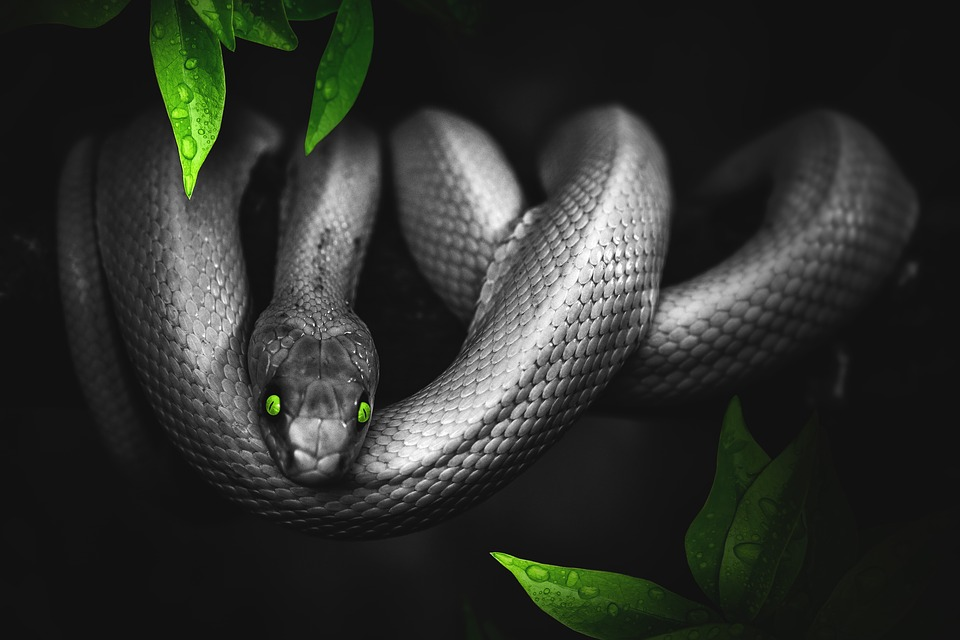 Snake, Jungle, Green, Reptile, Animal, Scale, Zoo