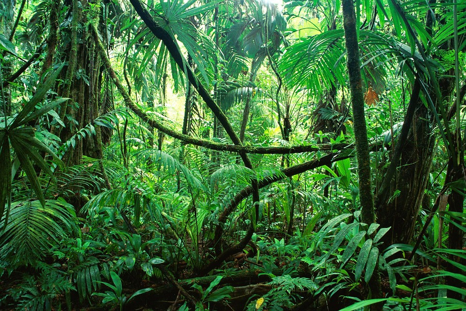 The, Jungle, Of, Chiapas