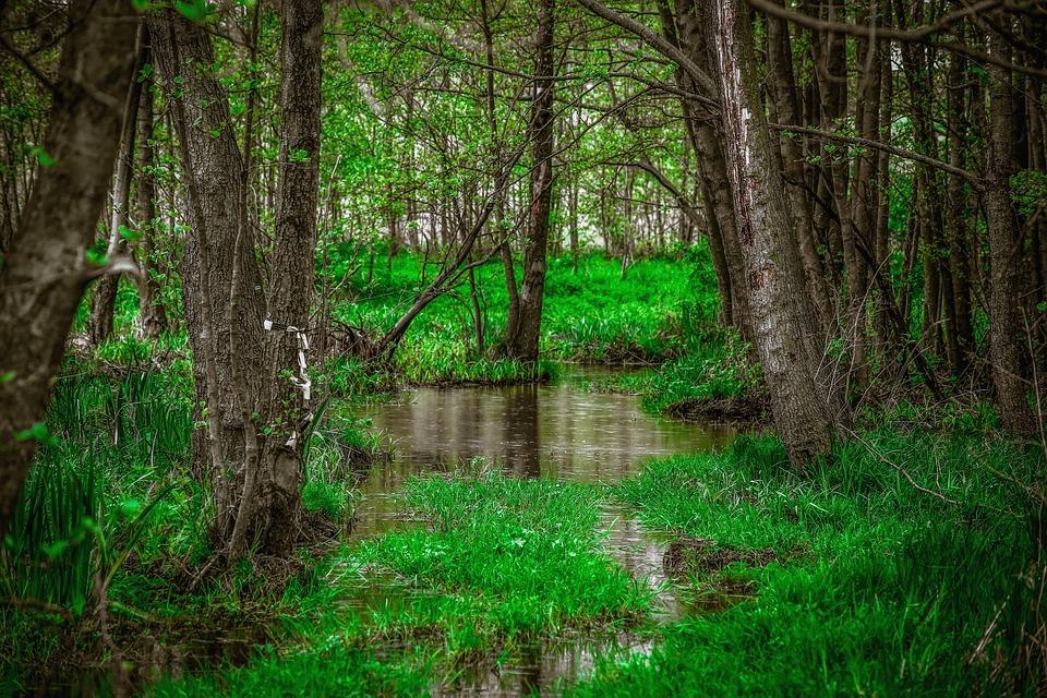 Green, Jungle, Nature, Forest, Flora, Vegetation