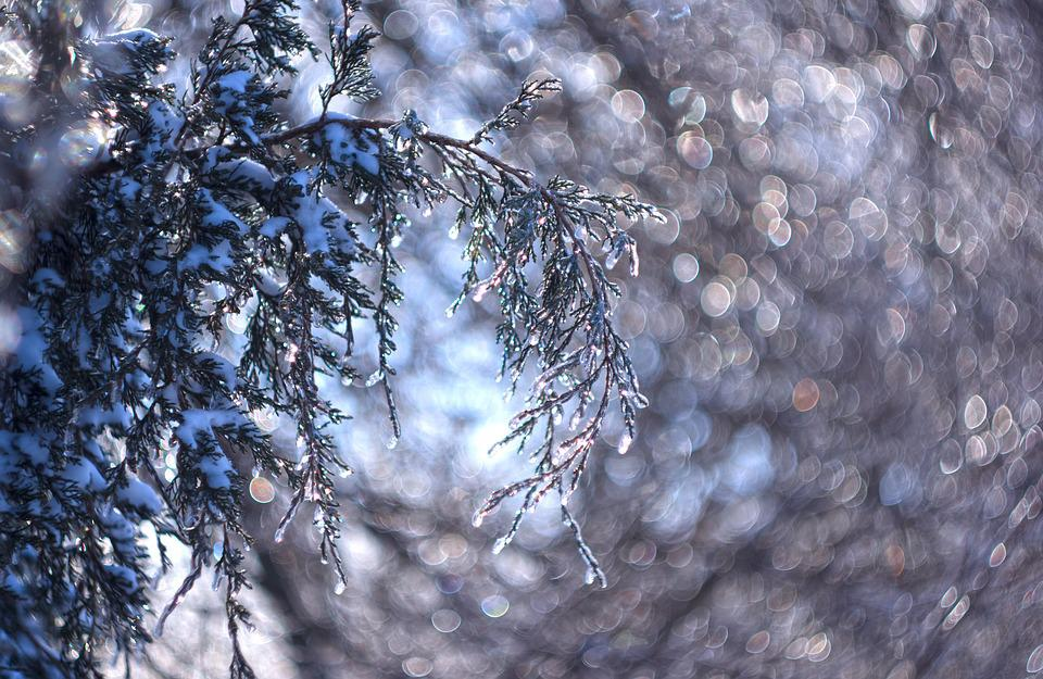 Ice, Icy, Crystals, Winter, Cold, Juniper, Light, Bokeh