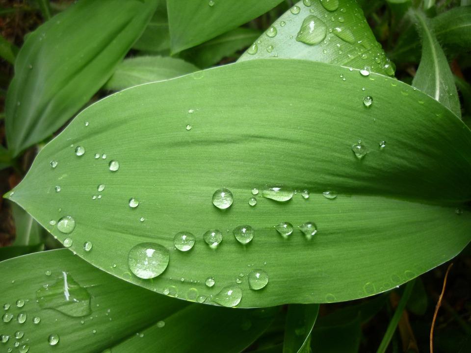 Green Leaf, Just Add Water, Rain, Raindrop