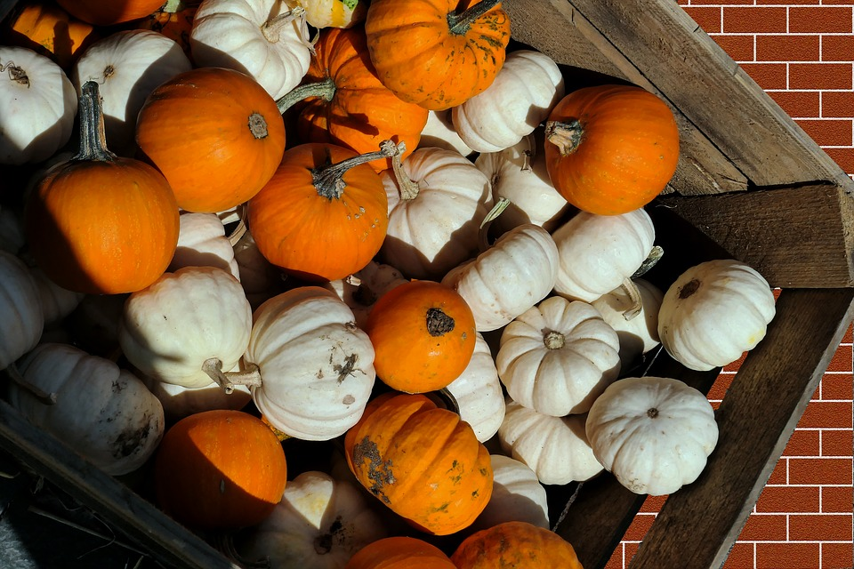 Pumpkins, Decorative Squashes, Autumn, Kabocha