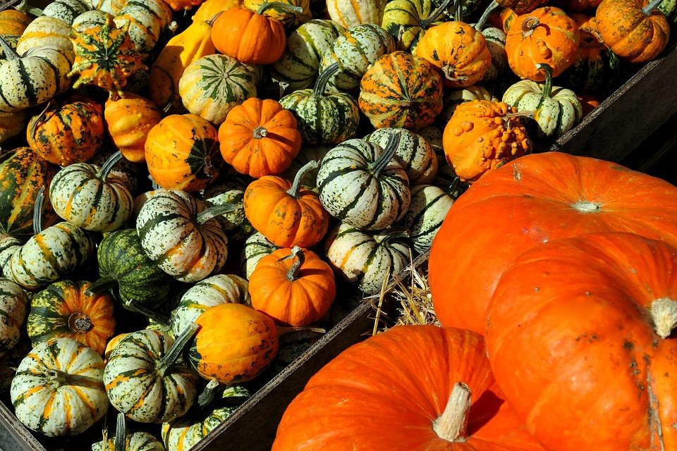 Pumpkins, Decorative Squashes, Autumn, Kabocha
