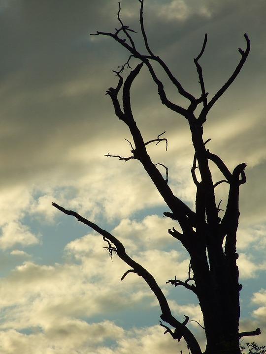 Dead Plant, Tree, Tree Framework, Kahl, Aesthetic