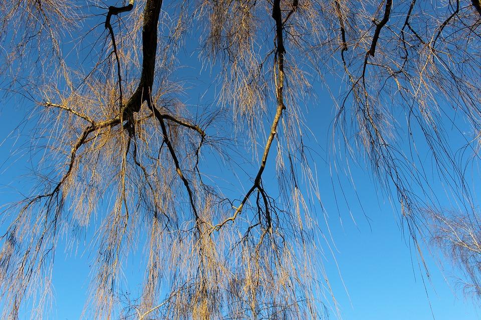 Tree, Aesthetic, Kahl, Sky, Blue, Winter