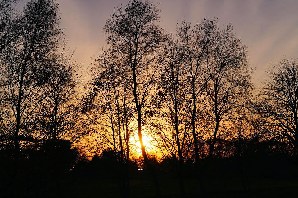 Sunset, Trees, Late Autumn, Sky, Evening Sky, Kahl