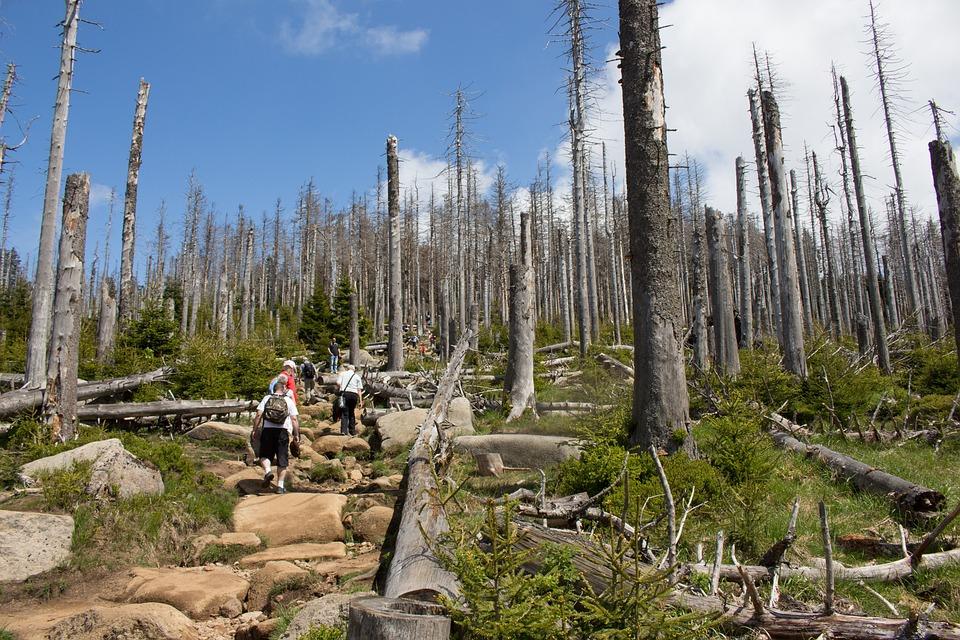 Waldsterben, Trail, Steinig, Stones, Karg, Burdensome