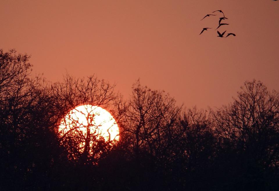 Sunset, Glow, Forest, Tattihallia, Karnataka, India