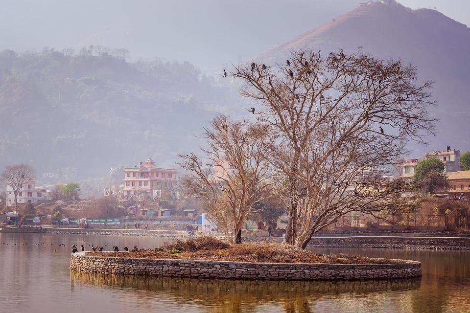 Water, Tree, Reflection, Nature, River, Kathmandu