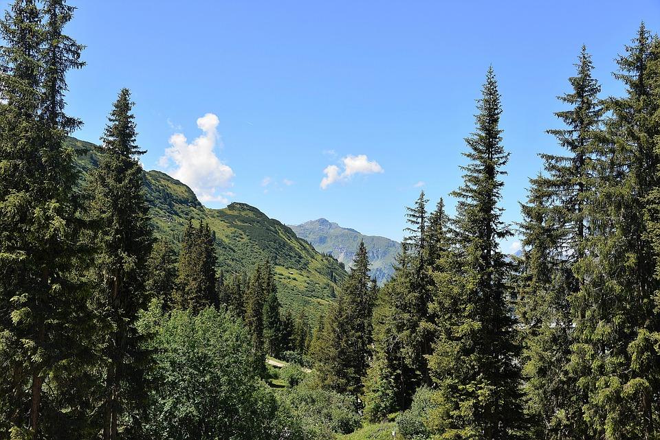 Forest, Mountains, Kaunertal, Vision, Panorama