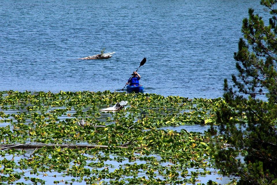 Kayak On String Lake, Lake, Water, Kayak, Lily Pads