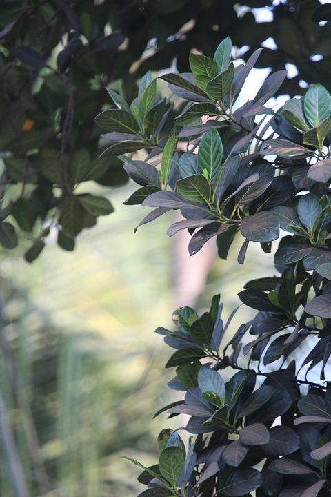Kerala, Jackfruit Tree, Best, Food, Jackfruit, Natural