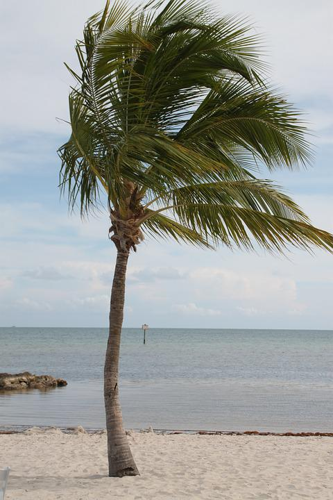 Palm Tree, Key West, Palm, Key, Florida, Beach, West