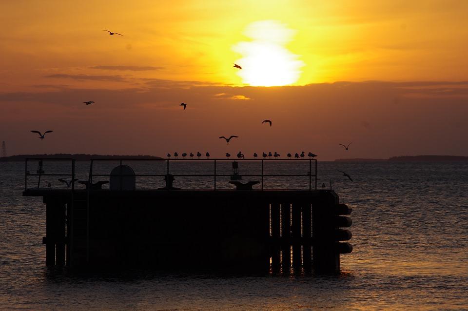 Key West, Bird, Sunset, Nature
